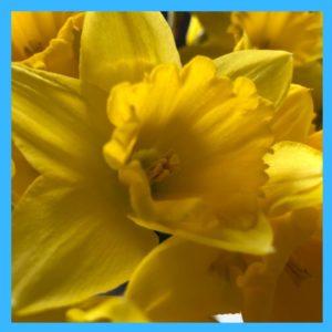 Blumen bringen Farbe auf den Tisch